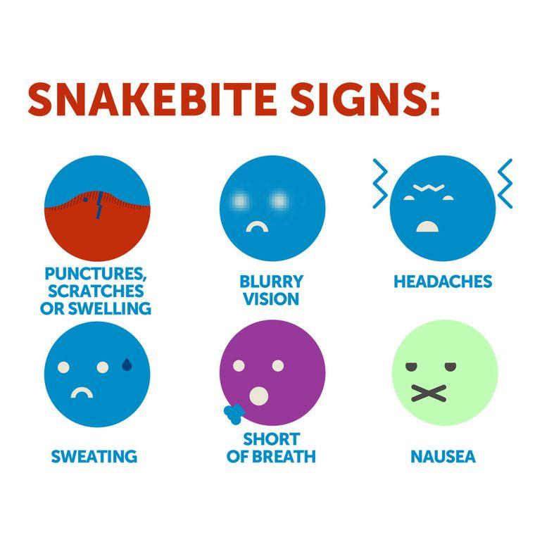 Snake bite symptoms