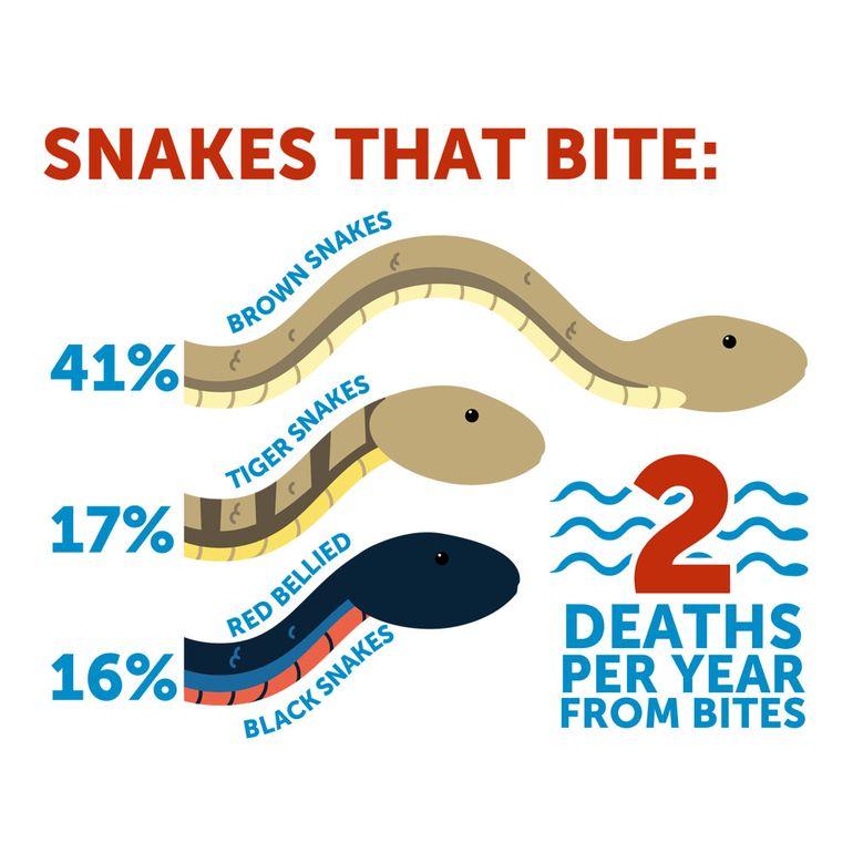 Australia's Deadliest Snakes