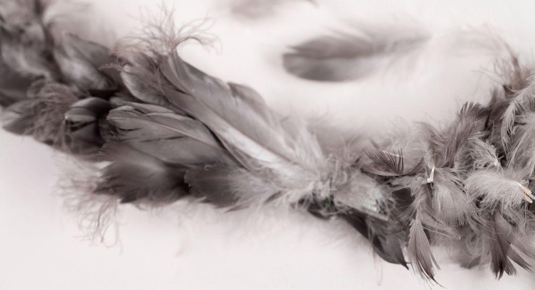 Lola_feathers