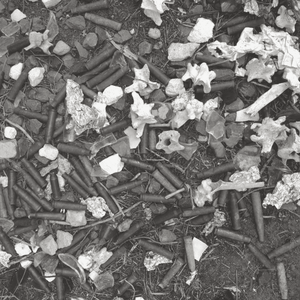 Black and white photograph of Bullets and Bones found in a bowerbird nest