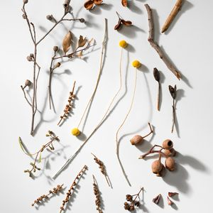 Photograph of assorted dried flowers, gum-nuts and sticks